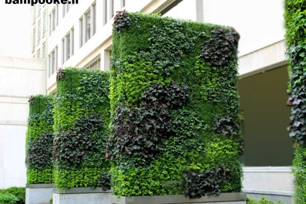 Vertical green wall 600x400 بام پوکه